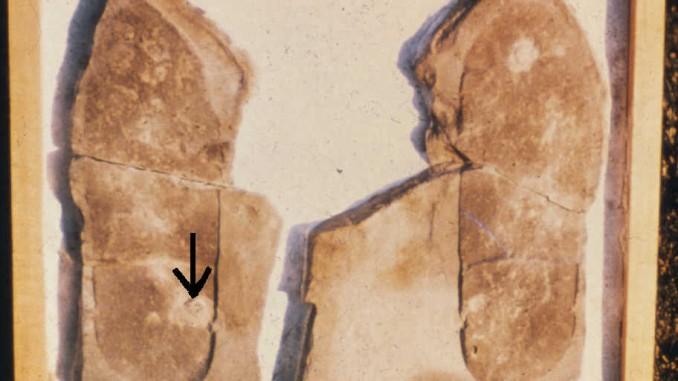 meisterprints-trilobite